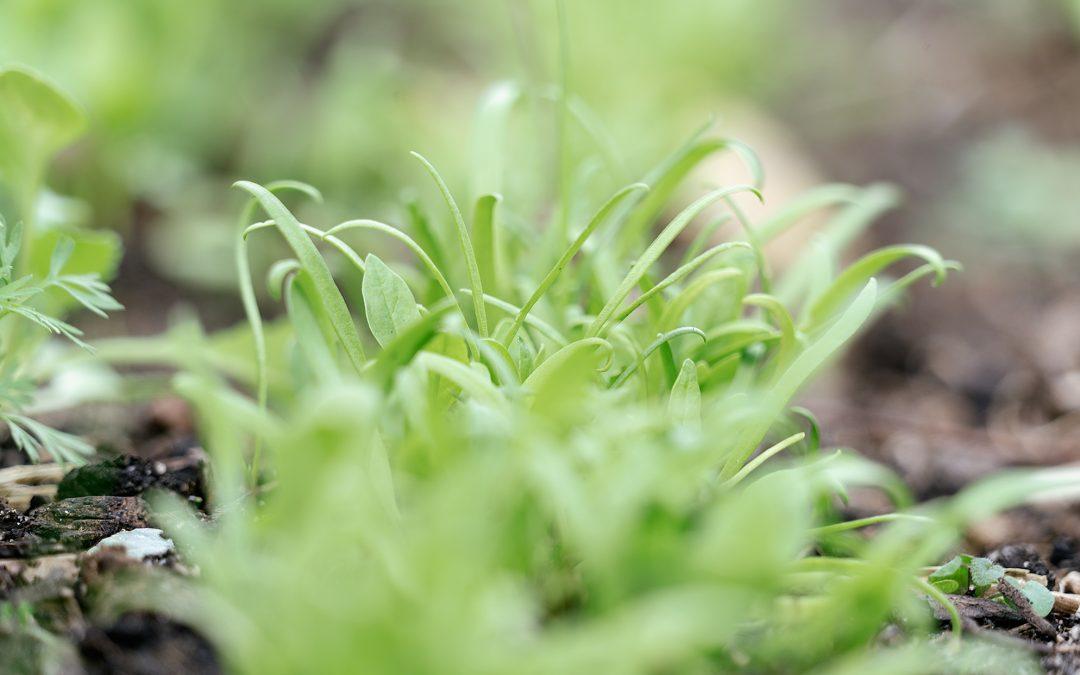 De moestuin in april: het zaaien en uitplanten kan beginnen!