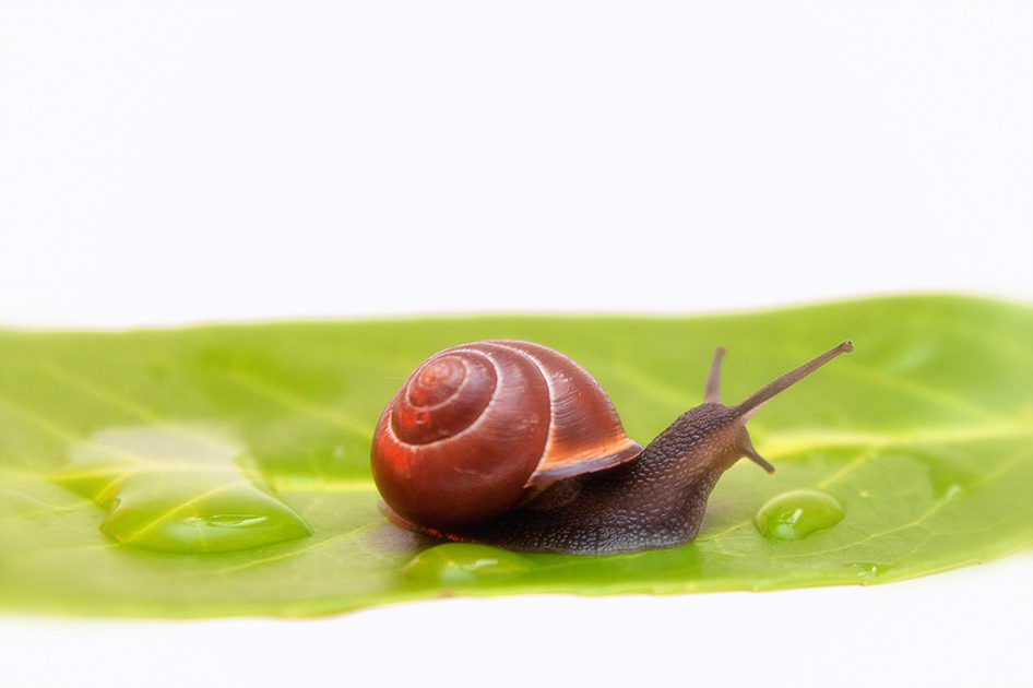 Ontslakken: 8 tips om slakken in je moestuin te bestrijden