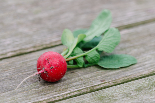 kleine moestuin welke groenten