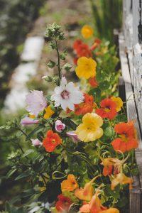 Nuttige bloemen in de moestuin