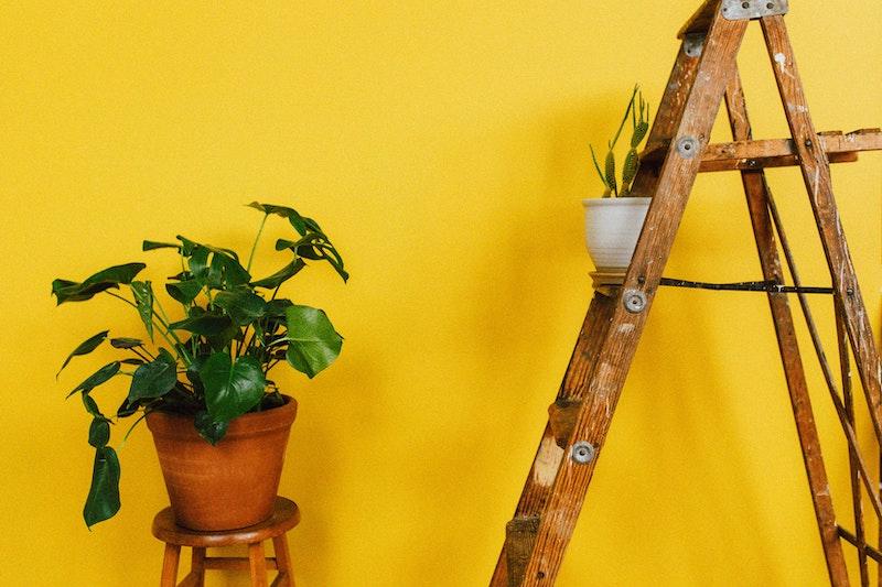 Een foto van een ladder met een plant erop. Leuk idee voor een plantenhoek in de woonkamer