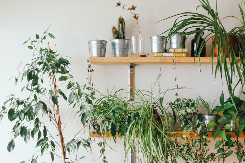 Foto van planken tegen de muur om een plantenhoekje in de woonkamer te maken