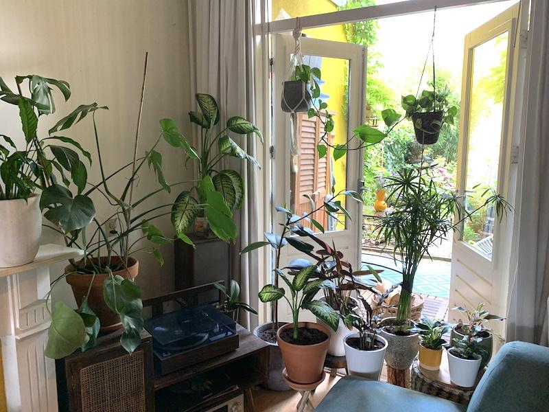 foto van plantenhoekje in de woonkamer