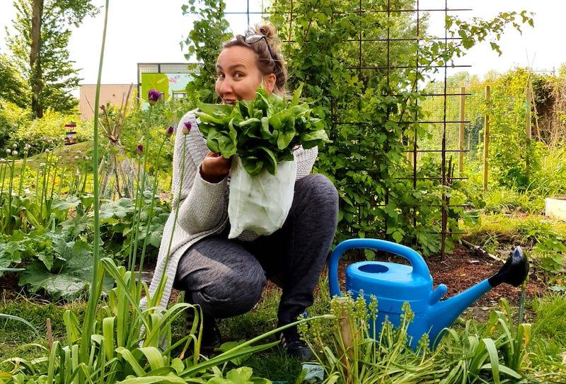 Foto van oogst in de schaduwmoestuin: een zak vol spinazie