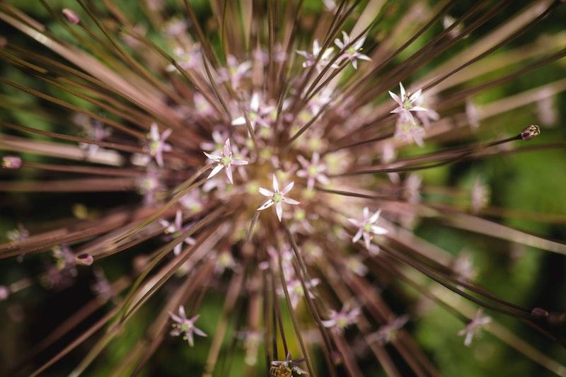 bloembollen voor bijen