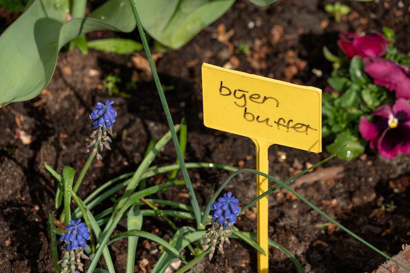 Bloembollen voor bijen in de moestuin