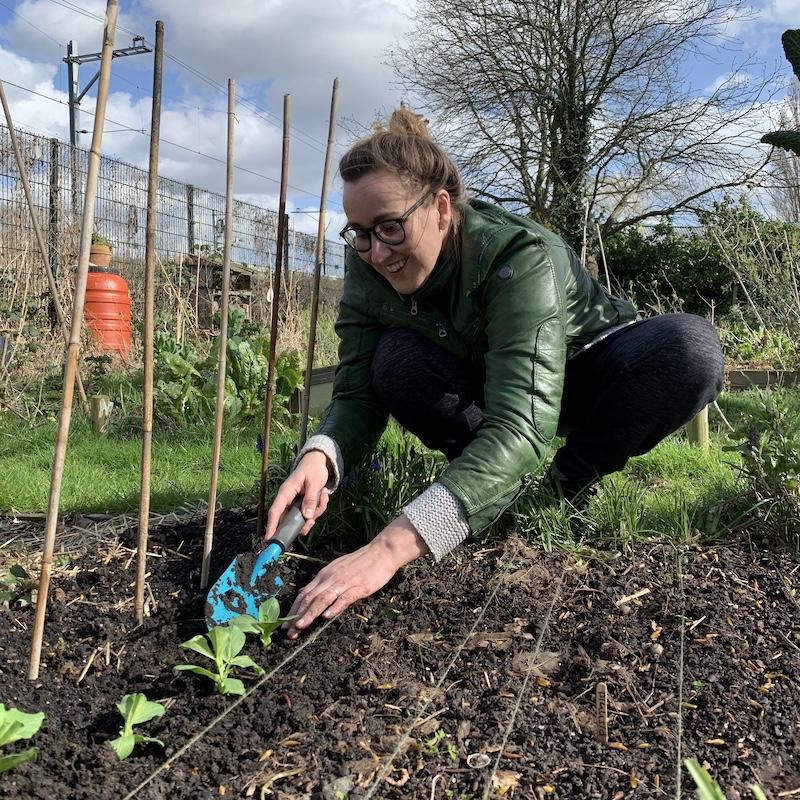 Moestuin in april: tuinbonen uitplanten