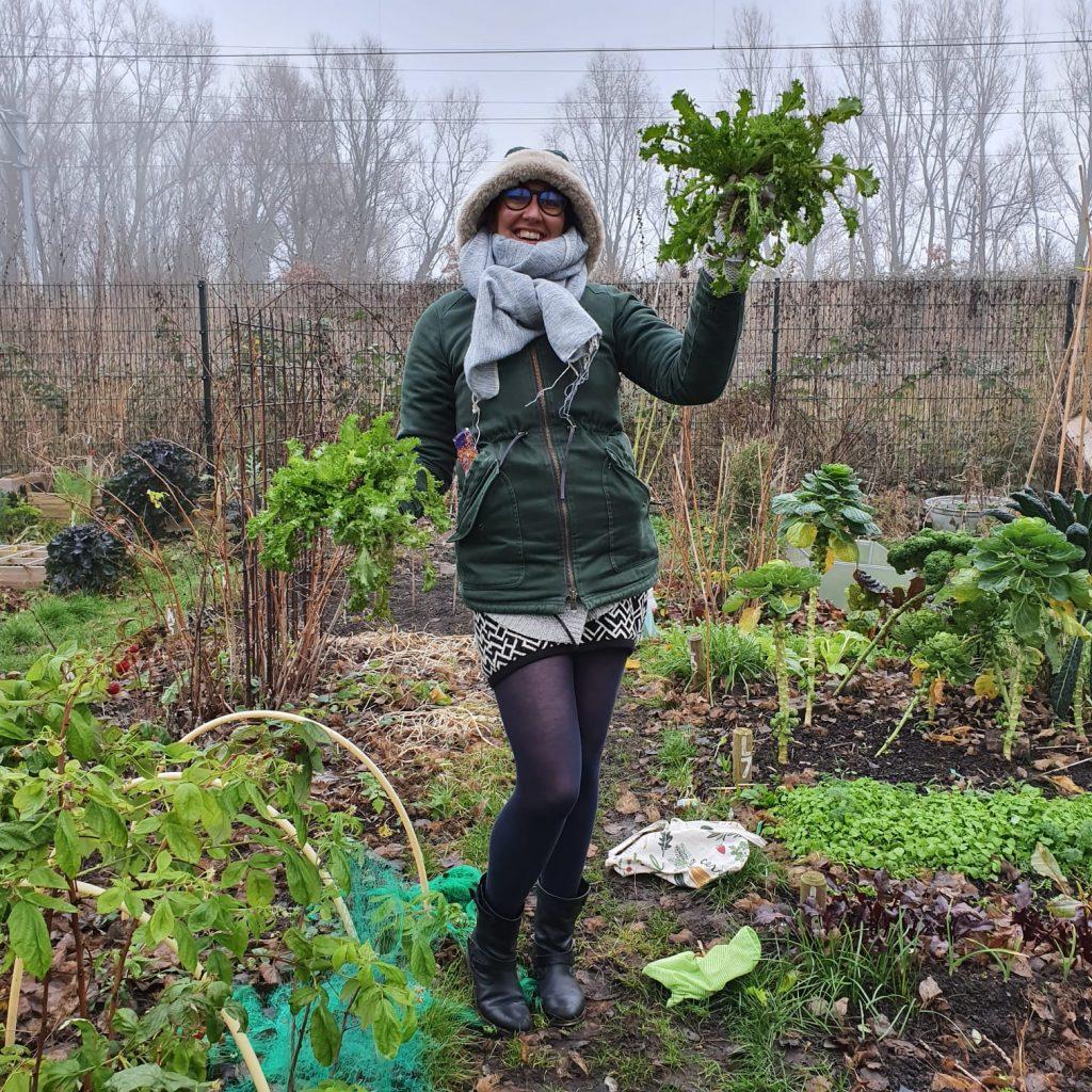 Andijvie planten en oogsten