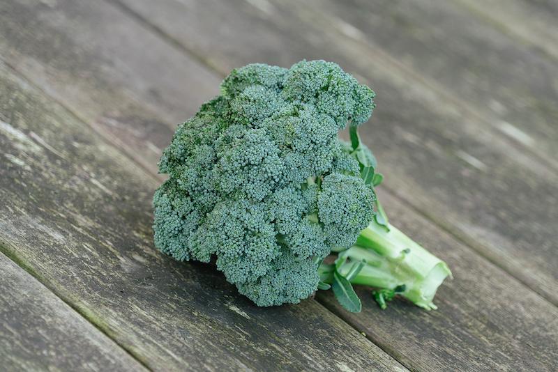 broccoli kweken: de oogst