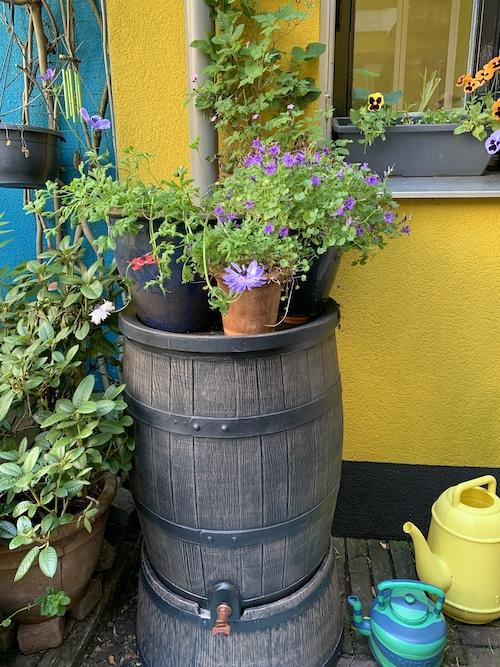 duurzame tuin_regenton